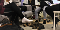 Opeharkan monet muodot: Interaktiivista liike-elämän englantia ja toimistokoiria